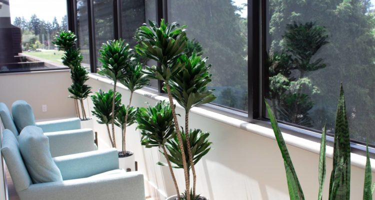 Tsawwassen Family Dental's waiting area with comfortable chairs and plants.